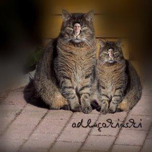 Katze im Doppelpack