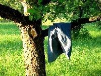 ♫ Eugen Onegin – Das Leben ist wie ein Baum Kulturmagazin 8ung.info Dorle Knapp-Klatsch