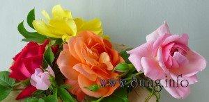 Rosen in rot, rosa, orange, gelb
