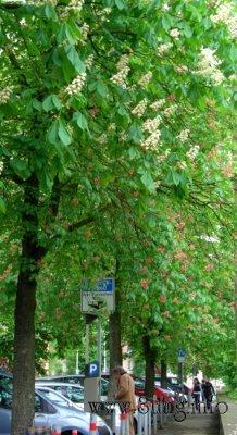 ✿ Bild des Tages: Kastanienstadt Kirchheim in voller Blüte Kulturmagazin 8ung.info Elke Wilkenstein