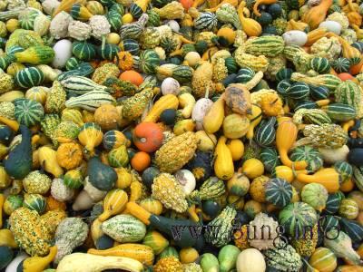Herbst – Kürbismärkte am Straßenrand Kulturmagazin 8ung.info Dorle Knapp-Klatsch