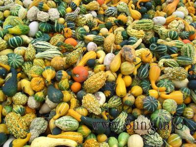 Herbst – Kürbismärkte am Straßenrand | Kulturmagazin 8ung.info