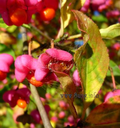☼ Wetter am 16. Oktober 2012 – Herbst mit bunten Herbstfarben | Kulturmagazin 8ung.info
