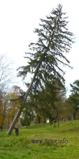 ☼ Wetter am 5. November - Der Mann, der Baum und der Herbst | Kulturmagazin 8ung.info