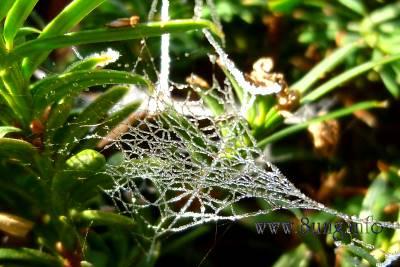 ☼ Wetter am 24. November 2011: Raureif - Spinnennetze im Sonnenschein | Kulturmagazin 8ung.info