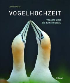 ✍ Naturbuch-Tipp: Vogelhochzeit - Von der Balz bis zum Nestbau | Kulturmagazin 8ung.info