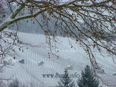 w.weinberge.metzingen.schnee.winter 006