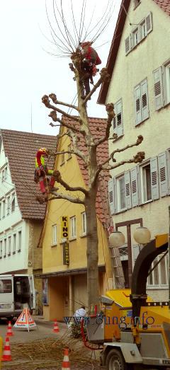 ☼ Bild des Tages: AstabFestival - wenn Männer in die Bäume klettern ... Kulturmagazin 8ung.info Elke Wilkenstein