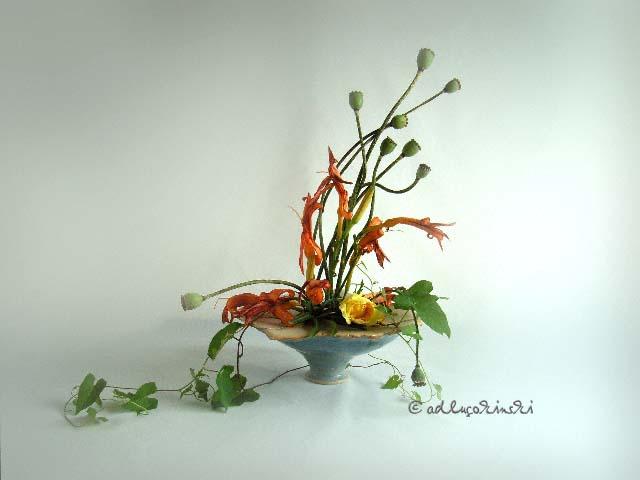 ✿ Bild des Tages: Taglilien am Tag danach - noch glimmt das Feuer | Kulturmagazin 8ung.info