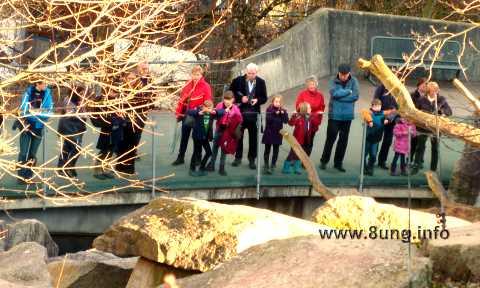 ☼ Bild des Tages: Wie die Affen im Zoo die Zuschauer sehen | Kulturmagazin 8ung.info