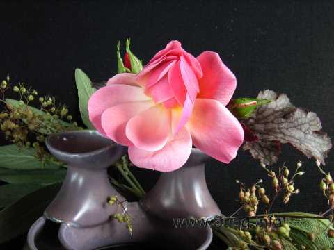 rosa Rose mit Salbeiblättern und Heuchera
