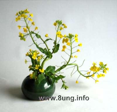 Blühender Kohl - attraktiv und lieblich duftend