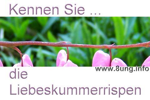 ❢ 163. Rätsel für UmdieEckeDenker: Liebeskummerrispen Kulturmagazin 8ung.info Dorle Knapp-Klatsch