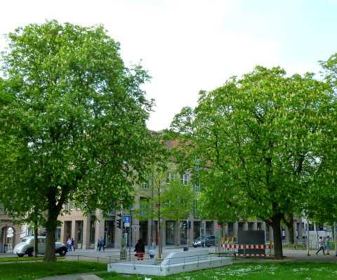 ☼ Wetter am 15. April 2014 – Kastanienblüte und/oder Ostern im Schnee? | Kulturmagazin 8ung.info