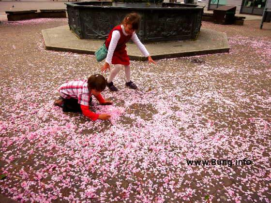 Spielende Kinder zwischen rosa Blütenblättern