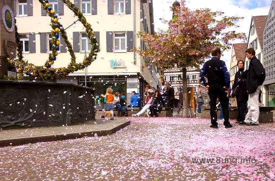 Rosa Blütenblätter am Osterbrunnen