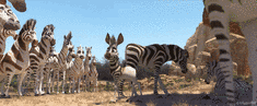 ☛ Trickfilm-Tipp: Khumba - das etwas andere Zebra Kulturmagazin 8ung.info Dorle Knapp-Klatsch