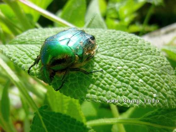 ☼ Natur & Wetter - smaragdgrüner Käfer im Sonnenschein | Kulturmagazin 8ung.info