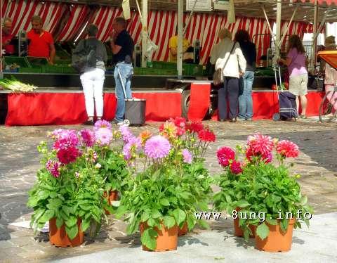Marktstand im Herbst mit roten Dahlien