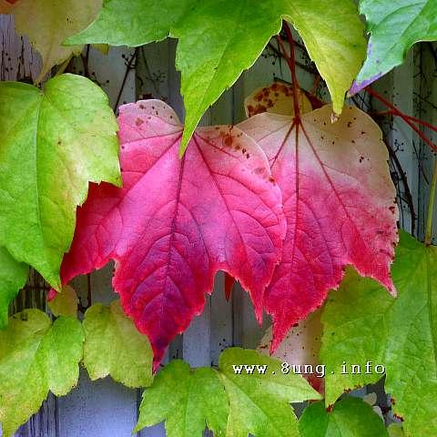☼ Wetter im Oktober 2014: wolkig, warm, frostfrei | Kulturmagazin 8ung.info