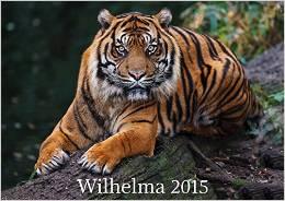 ✿ Kalendertipp: Wilhelma – Auge in Auge mit einem Tiger | Kulturmagazin 8ung.info