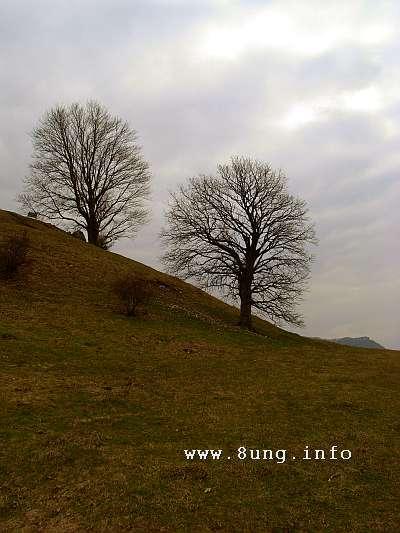 Wetter im Dezember 2014 - Berg, kahle Bäume, grauer Himmel