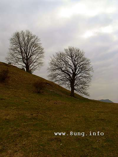 w.d.baum.landschaft.alb.dunst 007