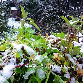 ☼ Weihnachten 2014 im Klee - Ostern 2015 im Schnee? Jein! | Kulturmagazin 8ung.info