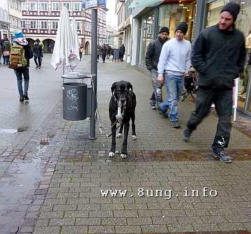 w.dogge.hund.schwarz (1)a