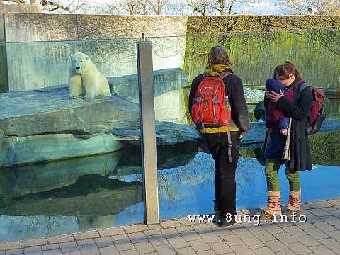 Eisbär, Familie und Kind im Zoo