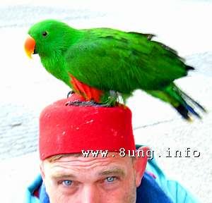 Papagei auf dem Kopf