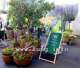Liegestuhl unterm Orangenbaum