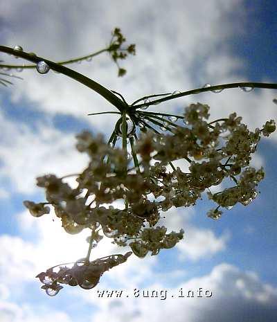 ☼ Wetter im Mai 2015 – Kümmel tropft | Kulturmagazin 8ung.info