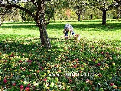 ✿ Bio-Äpfel gegen Streuobstwiesen-Pflege | Kulturmagazin 8ung.info