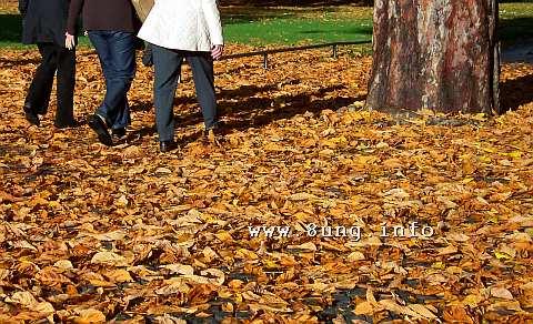 Herbstspaziergang in gelben Blättern