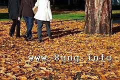 ☼ Wetter 1 Tag vor Vollmond im Oktober 2015: Goldene Herbst | Kulturmagazin 8ung.info