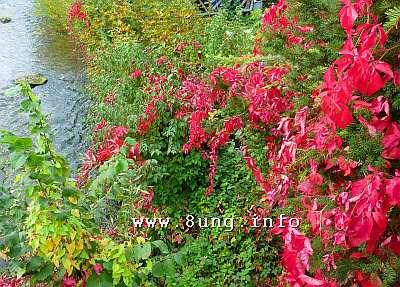 ☼ Wetter im Oktober – Pink, Purpur, Violett - natürliche Herbstfarben | Kulturmagazin 8ung.info