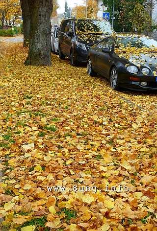 Wetter im November - Gelbe Blätter im Herbst auf Autos und Wegen