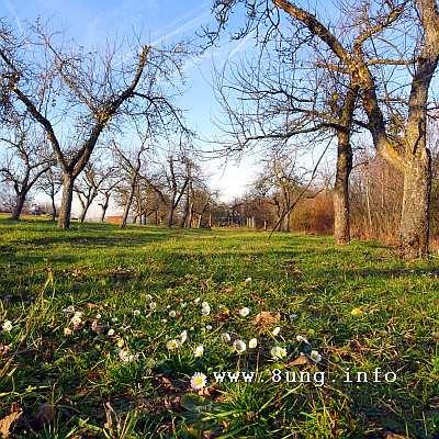 Gänseblümchen auf einer Wiese, kahle Bäume, Winter