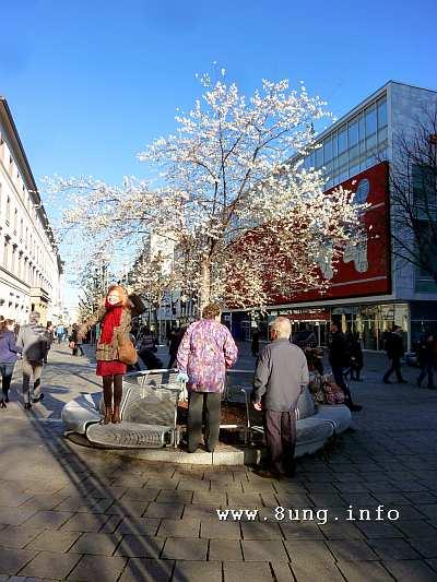 Blühender Kirschbaum im Advent