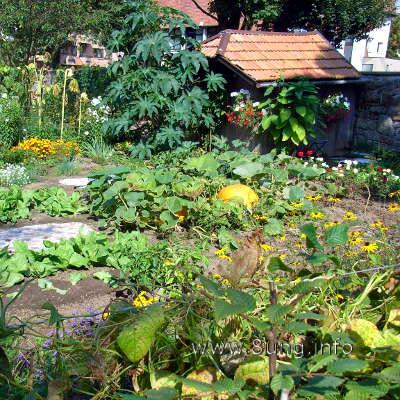 Bauerngarten mit Gemüse und Blumen