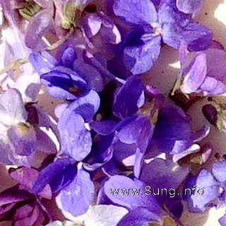 Veilchenblüten, lila bis violett