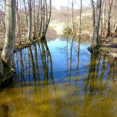 Bäume spiegeln sich im Wasser, ebenso der blaue Himmel