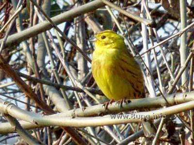 ☼ Wetter im März 2016 – manche Vögel sind schon da | Kulturmagazin 8ung.info