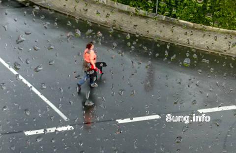 ☼ Fensterblick: Regen macht Pause - Hund geht Gassi | Kulturmagazin 8ung.info