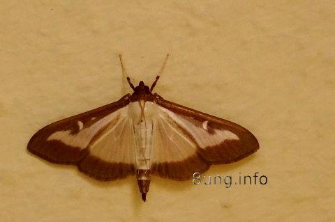 w.falter.schmetterling (2)