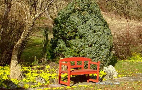 gelbe Winterlinge, rote Bank, kahle Bäume