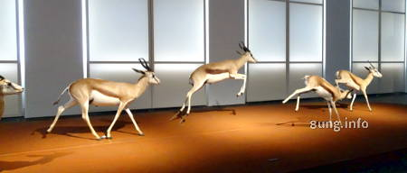 Springböcke im Museum Wiesbaden