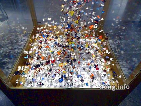 Schmetterlinge im Museum Wiesbaden