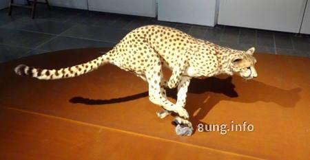 Gepard im Museum Wiesbaden